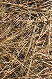 dry grass backgound
