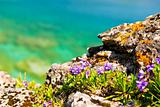 Wildflowers at shore of Georgian Bay