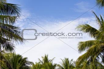 palm frame