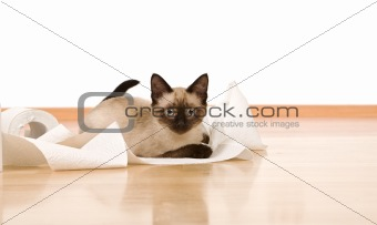 Kitten on the floor playing with a toilet paper roll