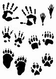 animal footprint stamps and human hands print