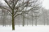 Misty winter trees landscape