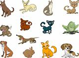 Some cats and dogs (plus a rabbit and a frog thrown in!)