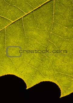 Closeup leaf