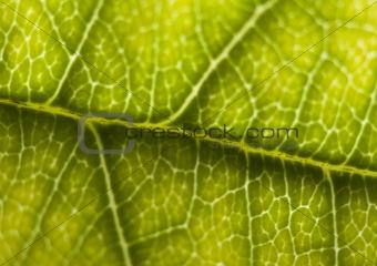 Closeup leaf