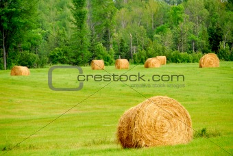 Hay bales