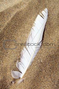 Beach Feather