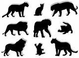 Feline silhouettes