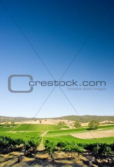 Vertical Vineyard