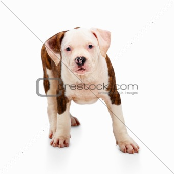 Color Image of a dog on white background