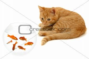 Kitten waiting for dinner