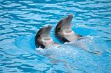 Dolephin race