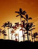 Coconut Palm Tree Silhouettes