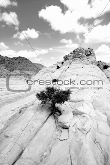 Close up on the Rocks with a Small Tree - Snow Canyon Utah