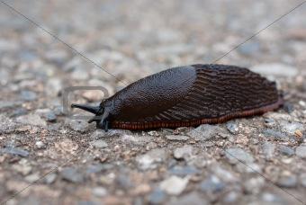 close up of a slug
