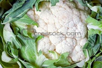 single cauliflower vegetable isolated on white