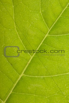 Green leaf close up