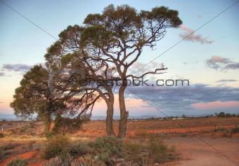 A lonely tree on red soil.