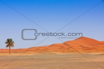 Arabian Sand Dunes and palm tree