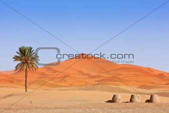 Arabian Sand Dunes and palm tree