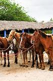 Horses gathered at beach