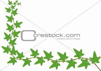 floral card - ivy