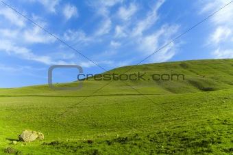 Green Grass Blue Sky (4441)