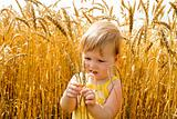Kid examining wheat spikes