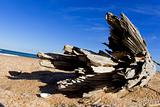 Driftwood on a beach