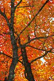 Fall foliage colors