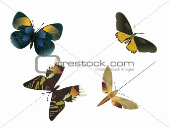four multicolored butterflies on a white background, vector