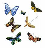 multicolored butterflies on a white background