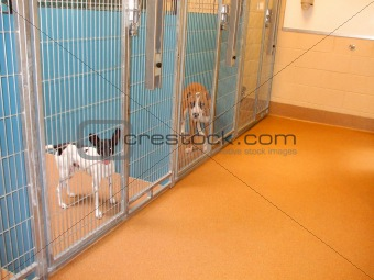 Animal Shelter Dogs