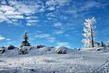 Winter tree blue sky