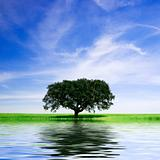 lonely tree in rural landscape with water reflex