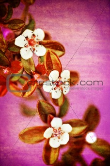 Grunge background with flower over old paper texture