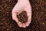 woman hand holding coffee beans