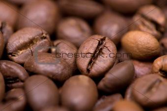 Close up macro shot of coffee bean