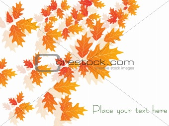 autumn leaves, wallpaper