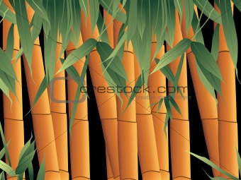 background, bamboo with its leaf