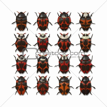 16 different bugs