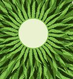 Fern Frame Background