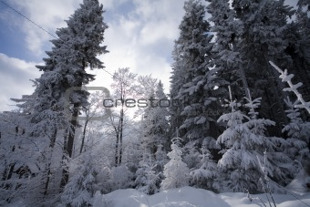 Landscape winter