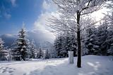 Landscape Winter - Winter Background