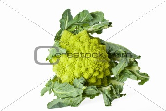 single romanesco vegetable isolated on white