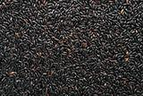 Forbidden City Black Rice