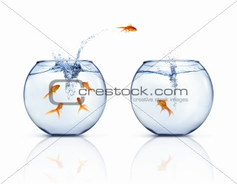 Jumping Goldfishes