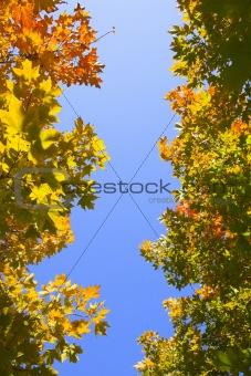 Fragment of Autumn