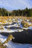 Iced forest lakes
