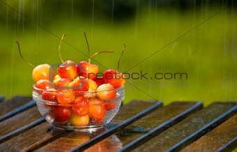 Bowl of Sweet Rainier Cherries in Rain